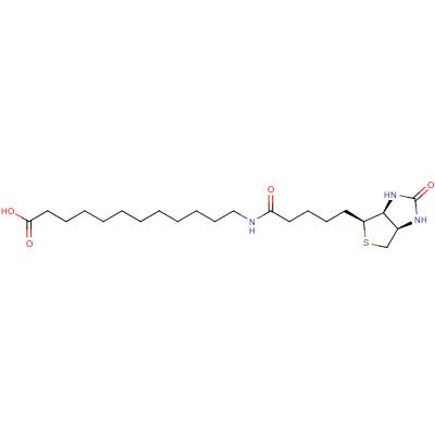 N-Biotinyl-12-aminododecanoic Acid, cas 135447-73-3