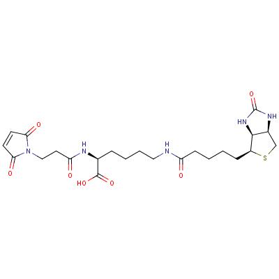 3-(N-Maleimidylpropionyl)biocytin
